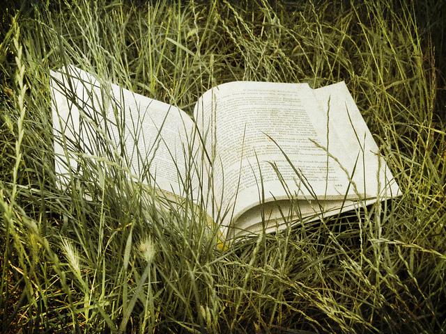 Libro_en_la_hierba